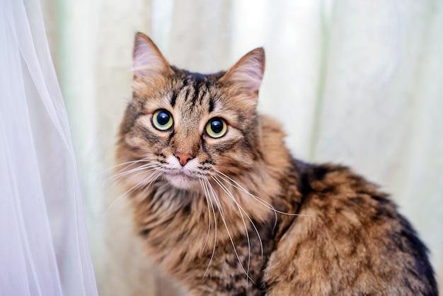 Красивый пушистый кот сидит рядом с свадебным платьем