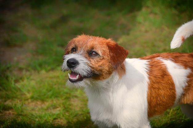 美しいふわふわの犬