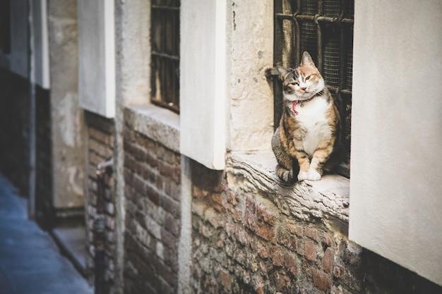 Bellissimo gatto domestico lanuginoso seduto da una finestra con sbarre su un muro di mattoni