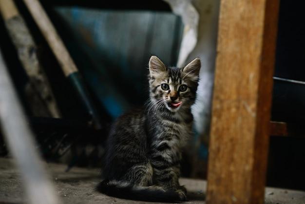 廃屋の美しいふわふわのホームレス子猫は興味を持って見え、なめる。孤独の概念。