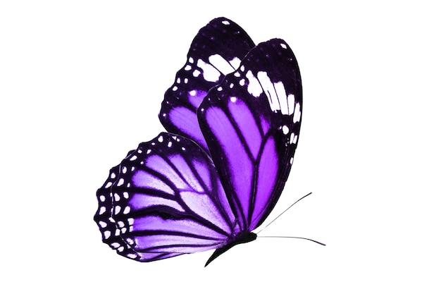 分離された美しい空飛ぶ蝶