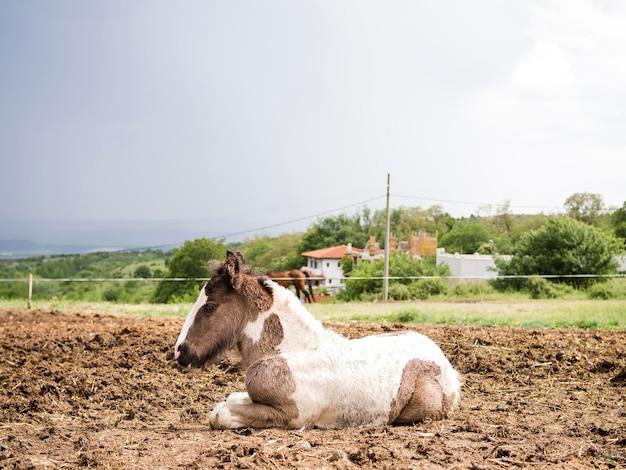 コピースペースを持つ美しい子馬