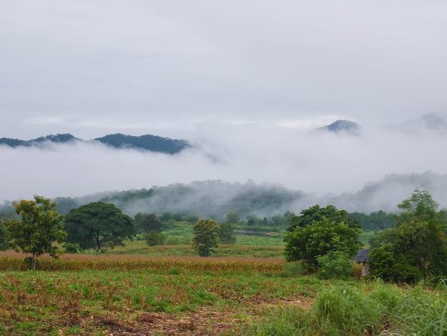 山の美しい霧の風景