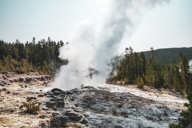 Beautiful fog rising from the ground near the trees captured in yellowstone national park, usa