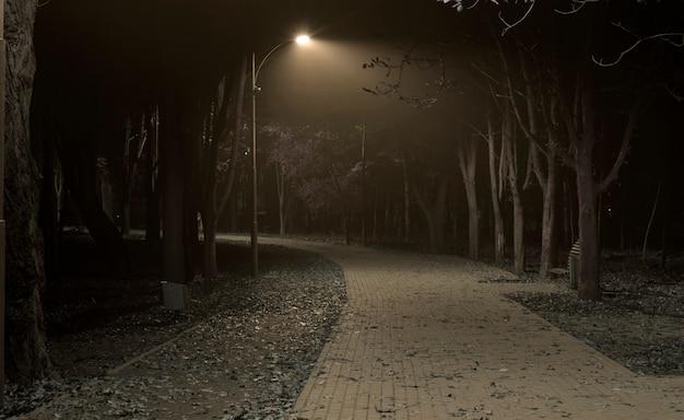 Красивый туманный вечер в осеннем парке