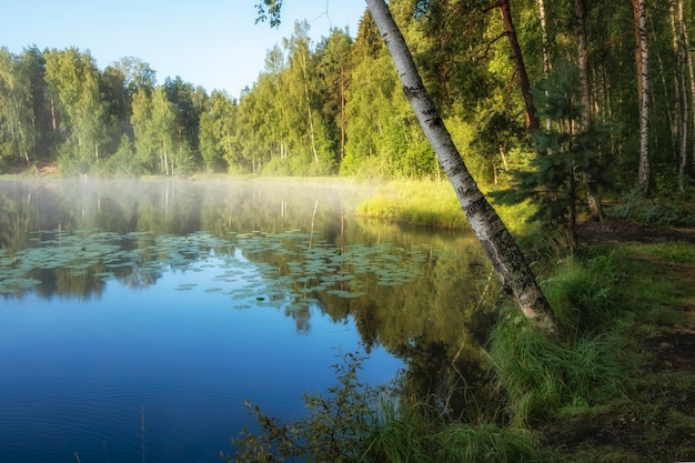 Beautiful foggy morning sunrise on a forest lake in summer in northern europe