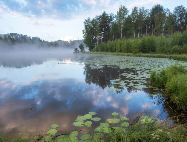 Beautiful foggy morning sunrise on a forest lake with water lilies in summer in northern europe