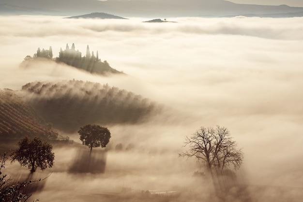 Красивый туманный восход солнца в тоскане, италия с виноградником и деревьями. естественный туманный фон