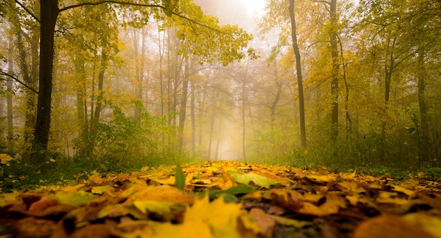 Beautiful foliage carpet in a scenic autumn foggy woo