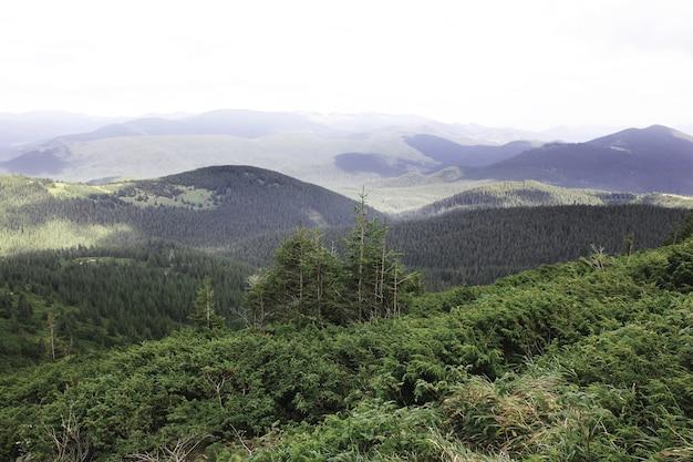 美しい森と山々