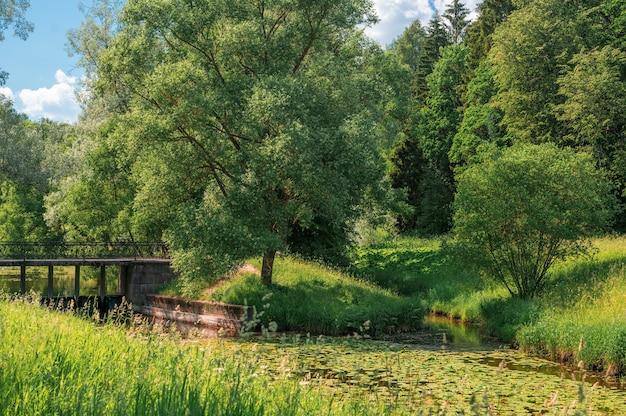 夏の日の美しい森と川の風景。森の川のほとりにある大きな木。夏の自然の中でタンポポの屋外の緑のフィールド。公園の草原の空と草の背景