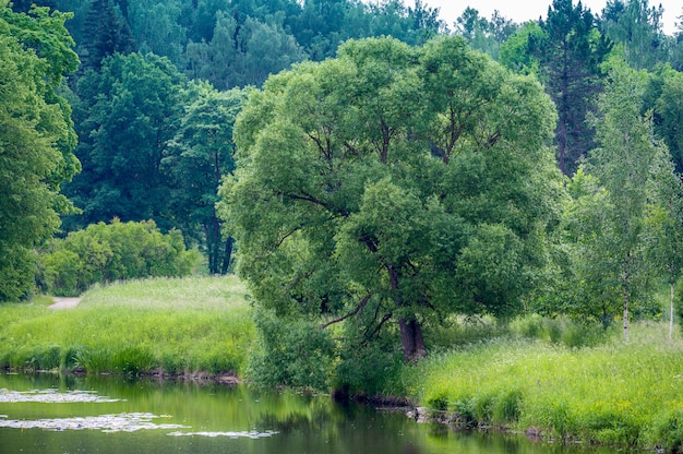 여름 날에 아름 다운 숲과 강 풍경입니다. 숲 강의 은행에 큰 나무