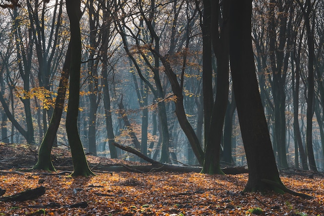 Beautiful forest in autumn with ground covered by colorful leaves