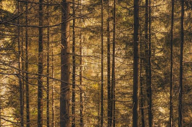 태양 빛 아래에서 키 큰 나무의 전체 아름다운 숲