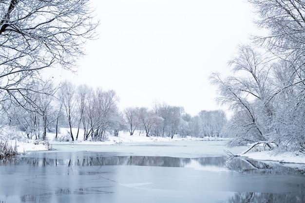 눈 덮인 겨울에 아름 다운 숲