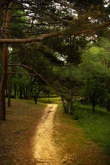 Красивый лес весной с ярким солнцем сквозь деревья