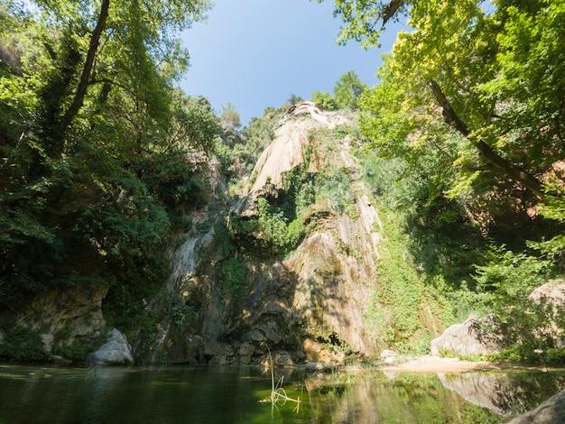 自然の中で美しい森