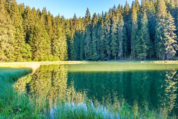 푸른 물과 아침 햇살이 있는 산속의 아름다운 숲 호수