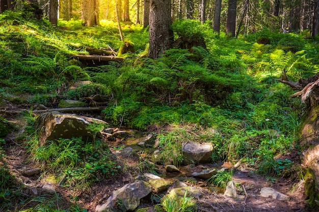 Красивый лесной пейзаж утром. украинские карпаты