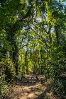 ホンジュラスのコパン遺跡の樹木に囲まれた美しい森の小道