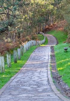 美しい森の小道。秋の背景、背景