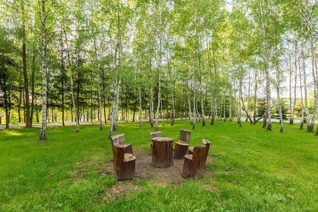 ピクニックのための美しい森の場所