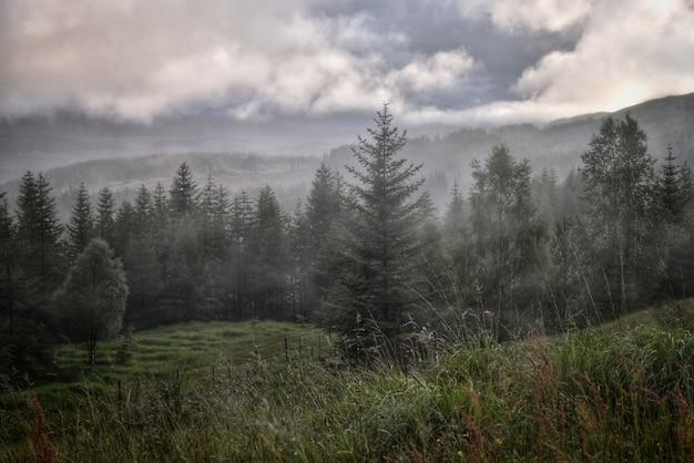素晴らしい空と美しい森の風景