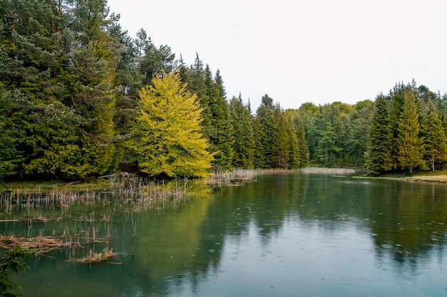 Beautiful forest in a small lake in opakua, basque country, spain