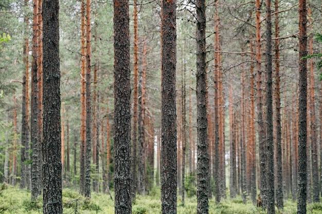 美しい森の木々。