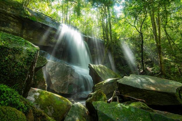 熱帯雨林のジャングルの美しい森の滝