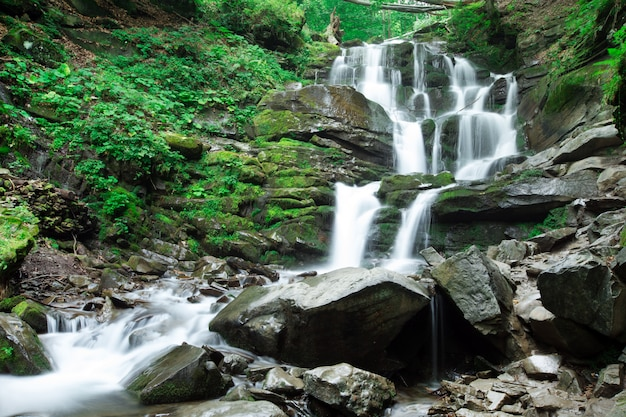 美しい森の滝