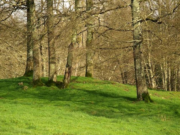 Красивый лес с зеленой травой в дневное время