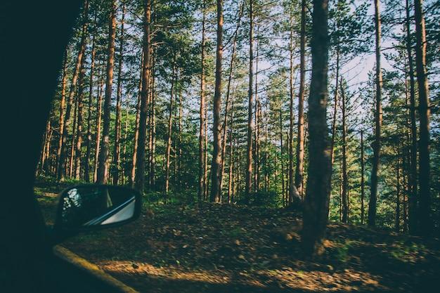 背の高い木々や植物が車の窓から撮影した美しい森
