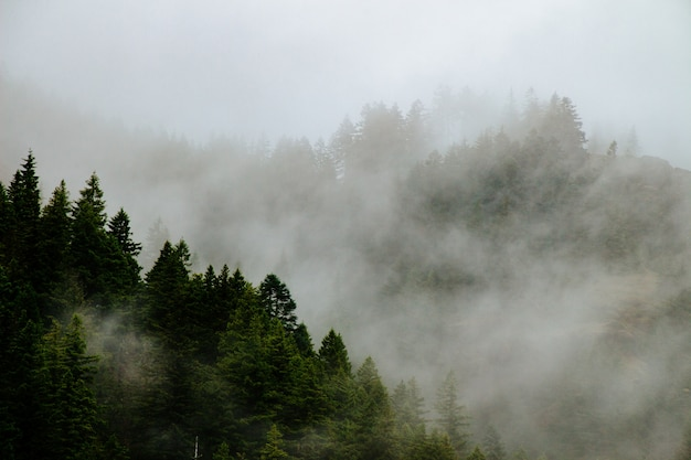Beautiful forested mountains in a fog