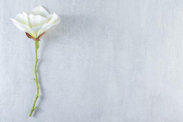 Красивый ароматный белый цветок на белом фоне.