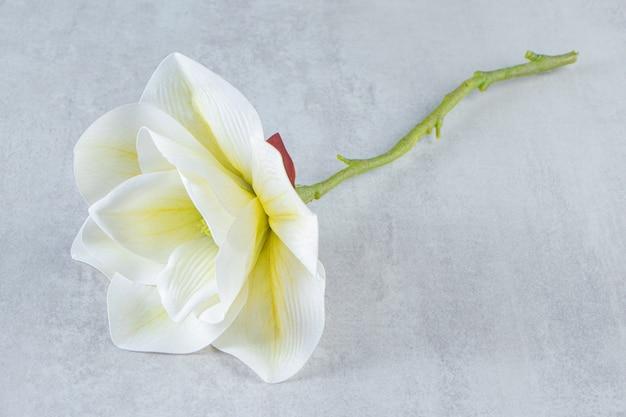 흰색 테이블에 아름 다운 향기 흰 꽃.