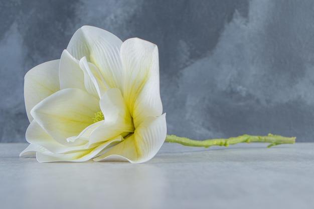 Bellissimo fiore bianco profumato, sul tavolo bianco.