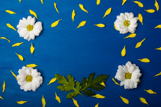Beautiful frame of white chrysanthemums and yellow petals on a blue background.