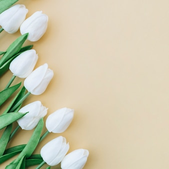 Beautiful frame with white tulips on yellow background