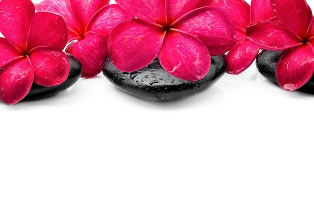 Красивые цветы франжипани с камнем дзен