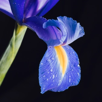 이 슬의 아름 다운 신선한 푸른 꽃 꽃잎