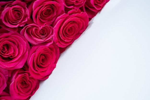 Beautiful fresh bright roses on a light background