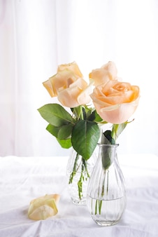 Beautiful fresh cut beige roses in glass vase on light background.