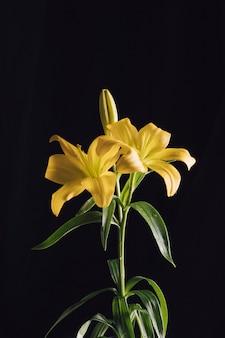 녹색 지점에 아름 다운 신선한 꽃