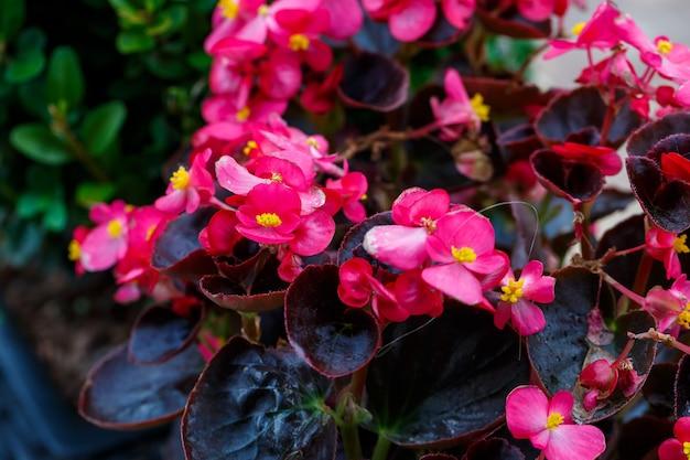 Красивые свежие садовые цветы для украшения крыльца в доме