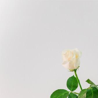 美しい新鮮な光の花