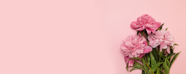 Beautiful fresh pink peonies on a pink background with a copyspace