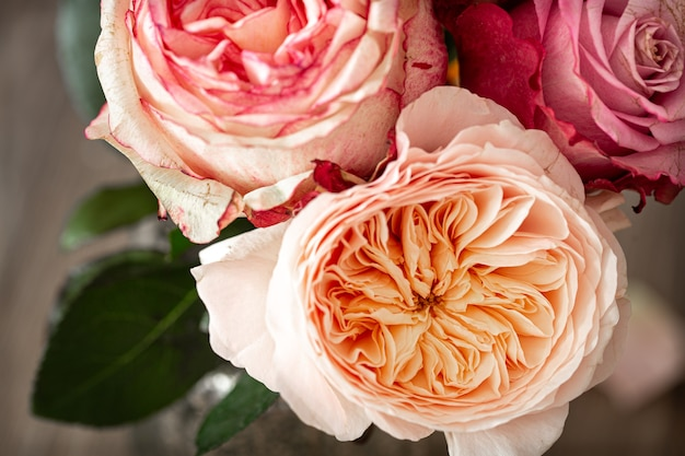 Beautiful fresh roses of different colors close up, floral background.