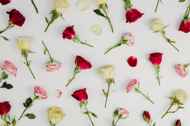 Beautiful fresh roses in flat lay