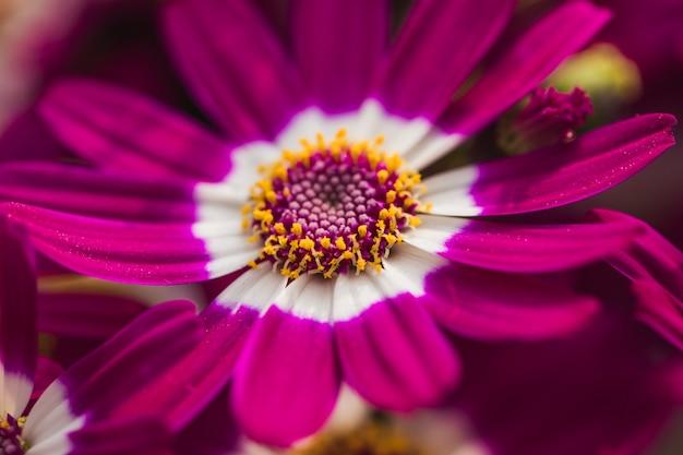 Beautiful fresh violet blossom